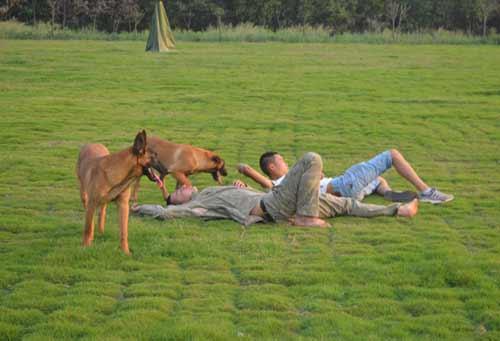 牧羊犬训练