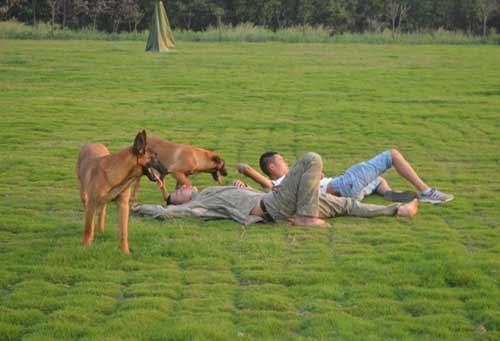 遂宁牧羊犬训练
