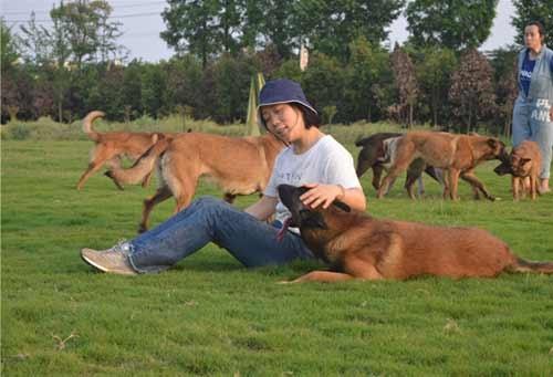 南充宠物犬训练