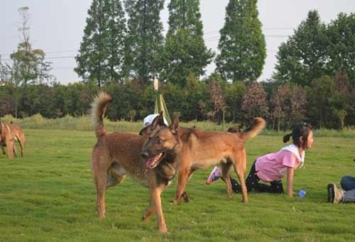 南充警犬寄养